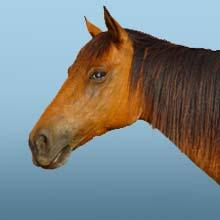 Ältere Pferde
