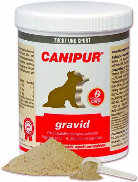 Canipur gravid